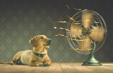 The dog is cooling down with the fan