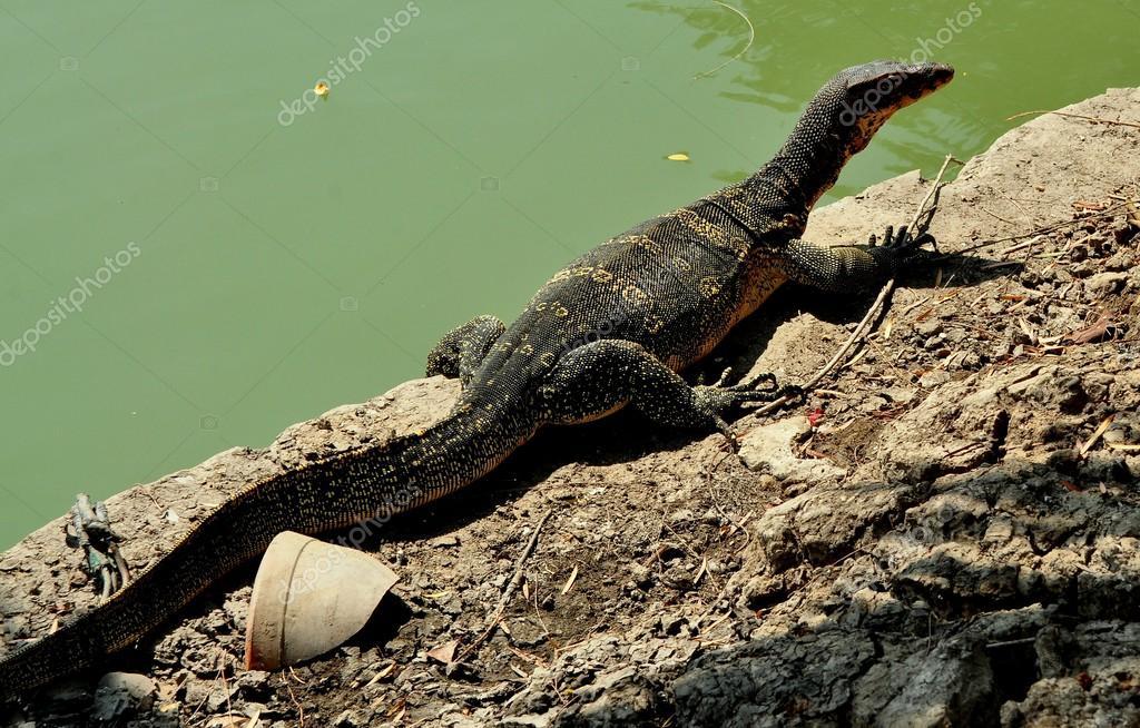 thai dragon 2 descargar messenger