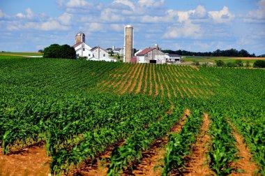 Lancaster County, PA: Amish Farm