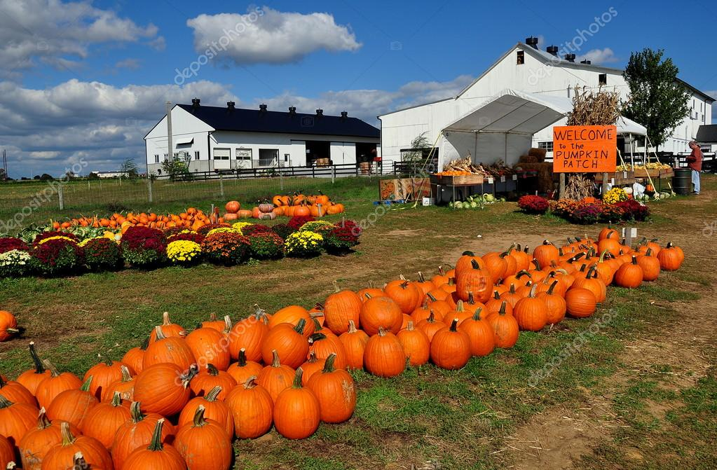 Ronks, PA: Pumpkin Patch Farm with Pumpkin Displays – Stock ... on lancaster county, silver spring, new holland, nickel mines,