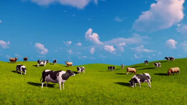 Krávy pasou na otevřených zelených loukách