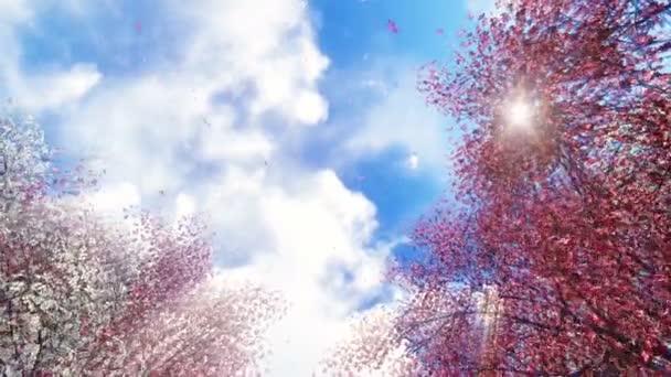 Sakura květiny a padající okvětní lístky na slunci