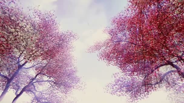 Blossoming cherry trees in sunshine sky