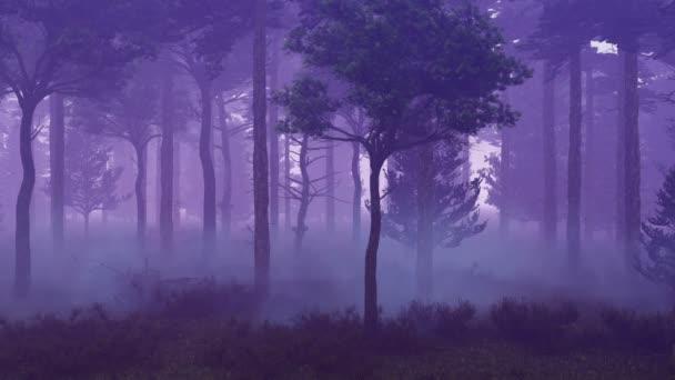Nebelwald bei Sonnenuntergang Zeitraffer 4k