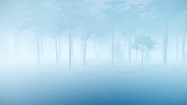 Dichter Nebel im gruseligen Kiefernwald 4k