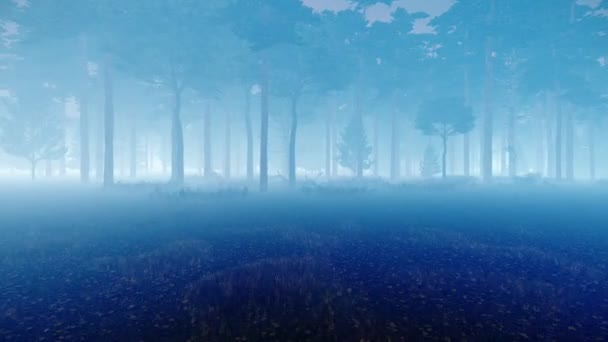 nebliger Herbst-Kiefernwald in der Dämmerung 4k
