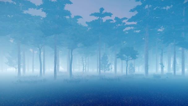 Ködös fenyőerdő alkonyatkor 4k