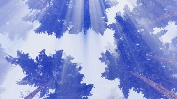 Pine treetops against bright sunshine sky 4K