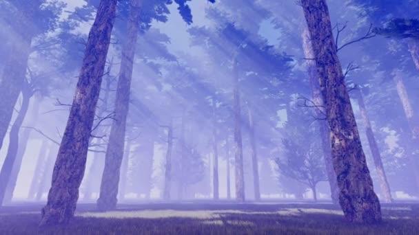 Napsugarak ködös fenyves erdőben 4k