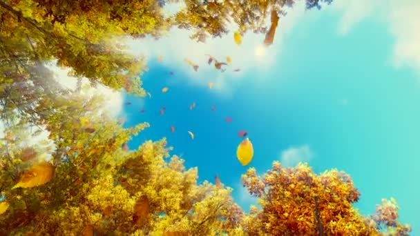 Falling autumn leaves and blue sunny sky background