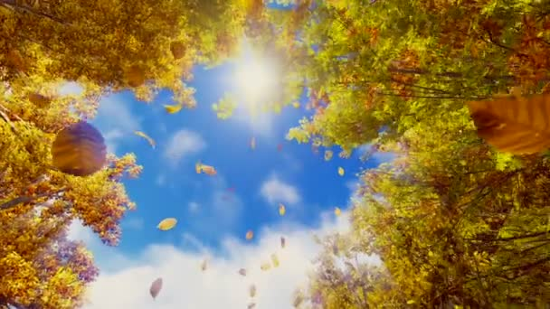 Falling autumn leaves and sunshine sky in slow motion