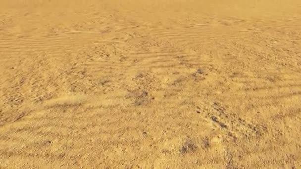 Dry tree in the desert