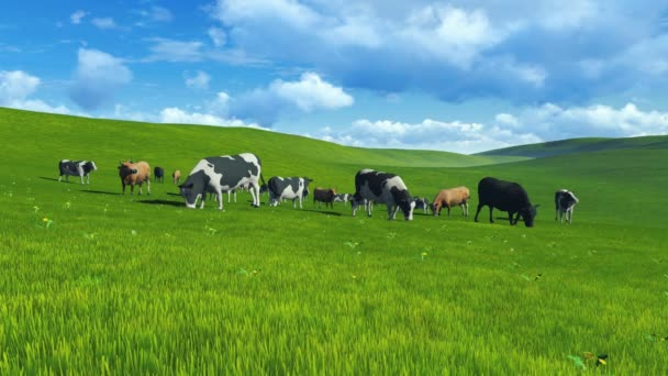 stádo krav na pastvu