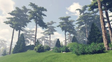 Sunny day in the pine forest 9