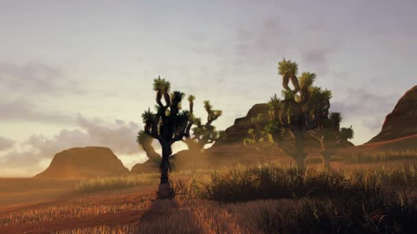 Joshua stromy a červené skály při západu slunce. Časová prodleva