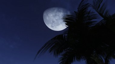 Palm tree silhouette against half moon