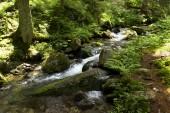 Creek nel deserto di Bassi Tatra Slovacchia montagne