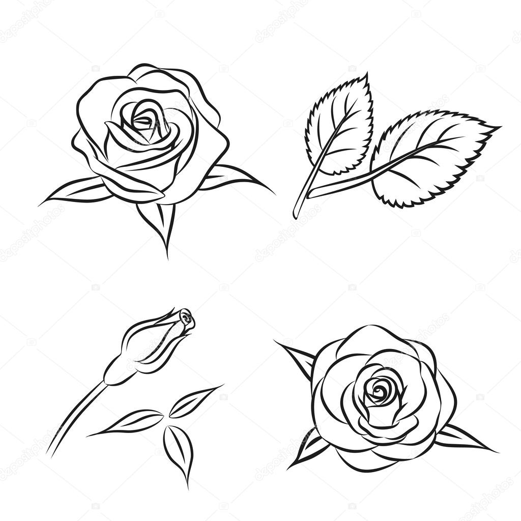 This is an image of Lively Rose Leaf Drawing