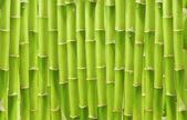 krásné zelené bambusové pozadí