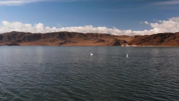 Weiße Schwäne auf einem Bergsee, Ein See in den Bergen der Mongolei, ein Rastplatz für Vögel. Luftaufnahme.