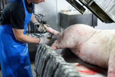 Pork carcasses are processed at the factory. Meat production. A place where pigs are killed