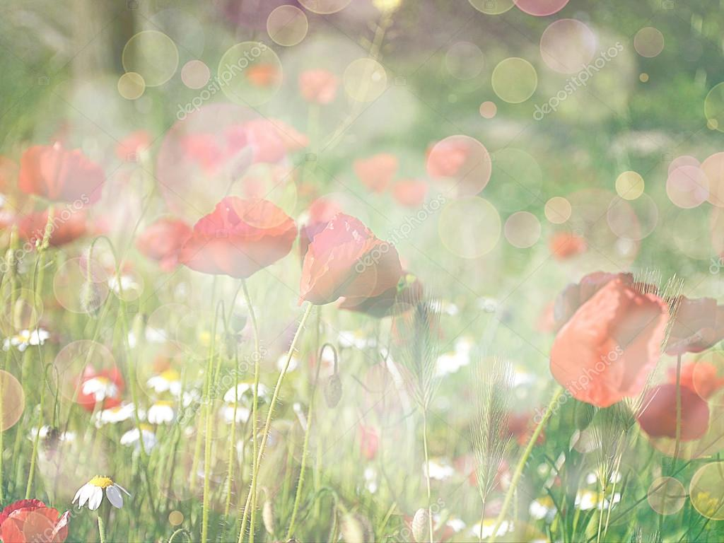 Abstract floral background - field of poppies. flowers with colo