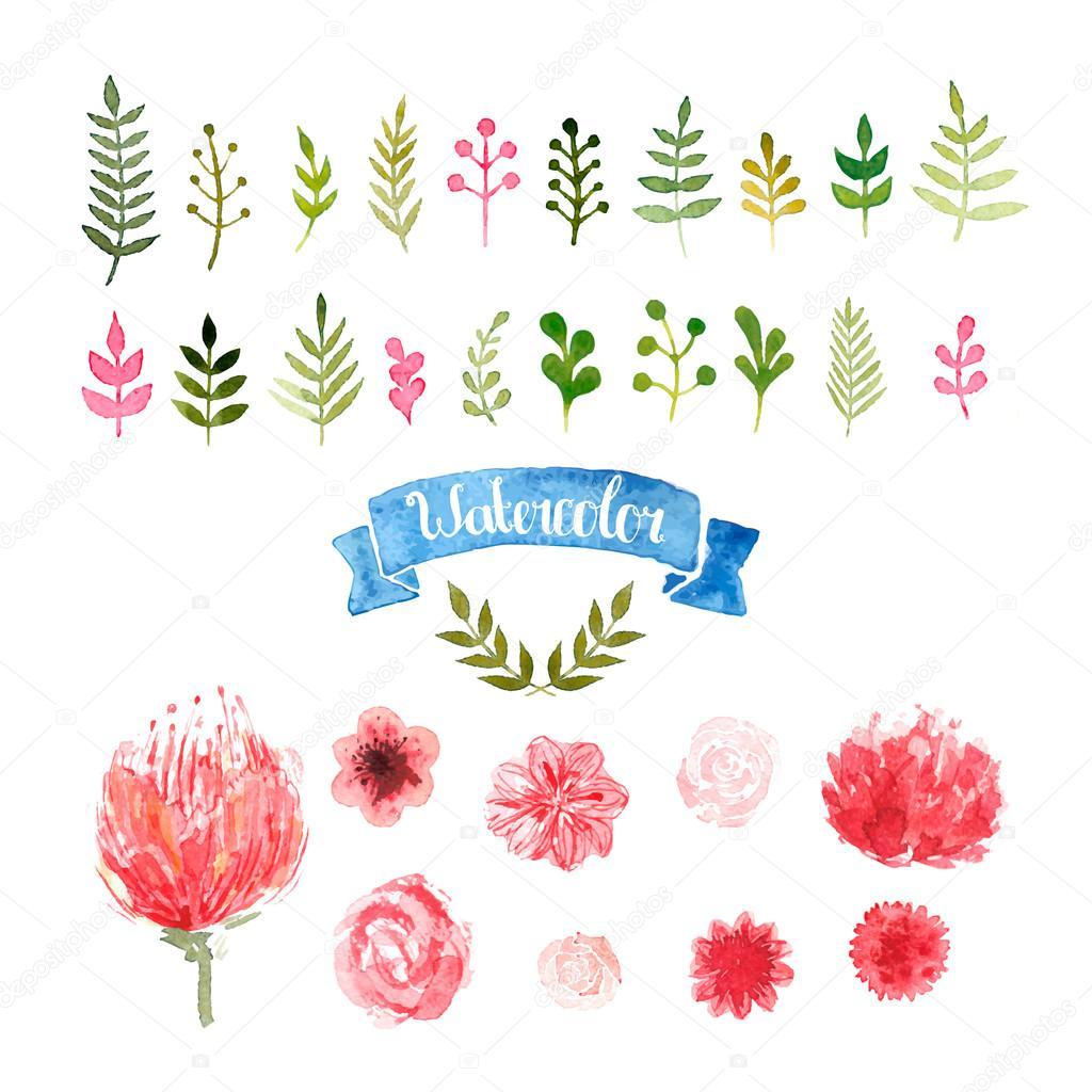 Watercolor flowers, laurels and leaves