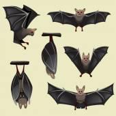 Satz von spooky Halloween Fledermäuse
