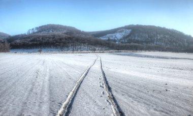 Winter Field Scene