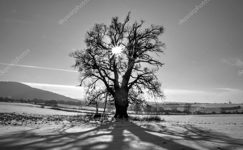 Lonely Tree with Sun Rays Coming Through