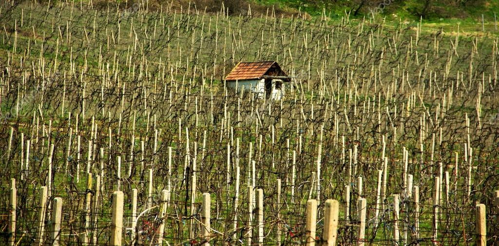 Old Cottage House in Vineyards
