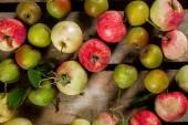 Venkovské jablek a hrušek
