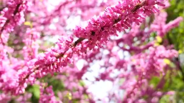 Růžový strom kvetoucí