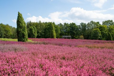 Natural lndscape of blue sky, bight pink flowers and green trees