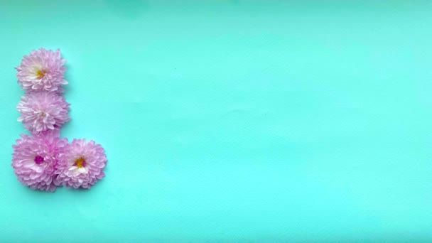 Stop motion animation the word love appears from pink chrysanthemum flowers on a gentle blue background.