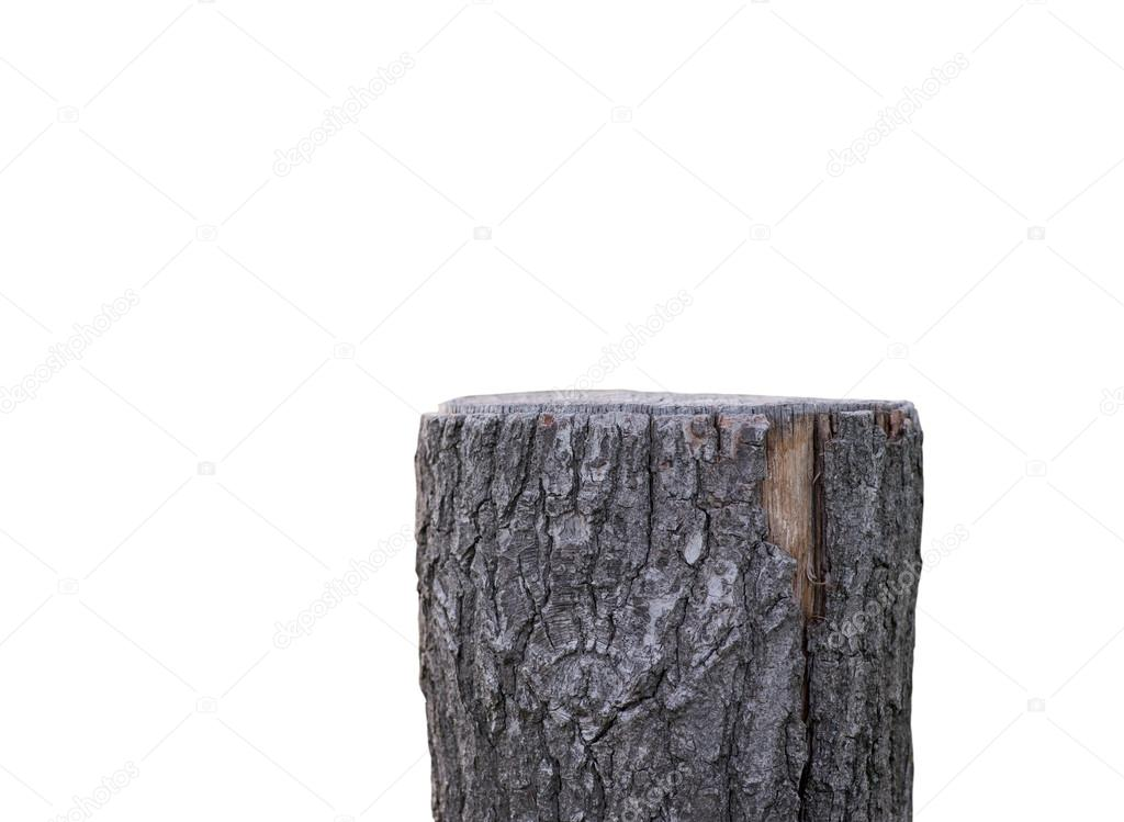 Stump isolated on white