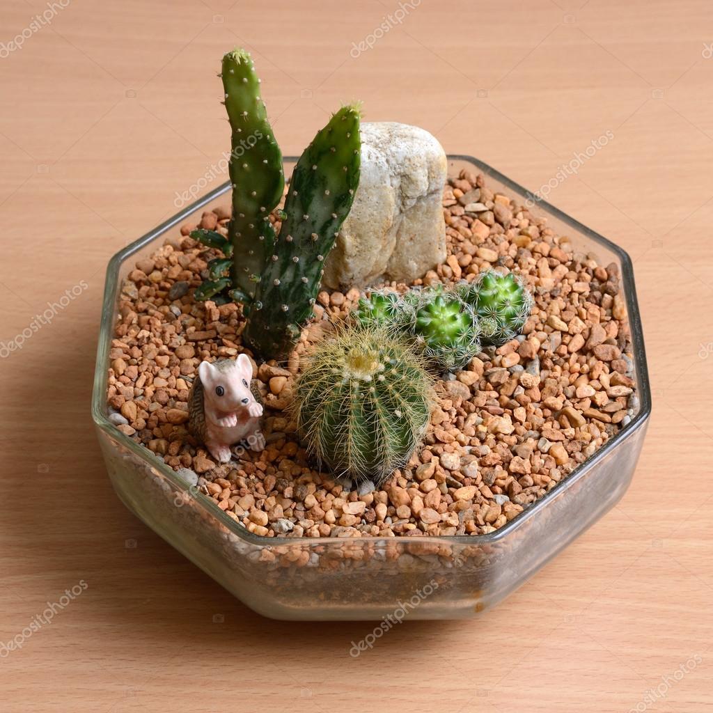 Small Cactus Garden On Wooden Table. U2014 Stock Photo