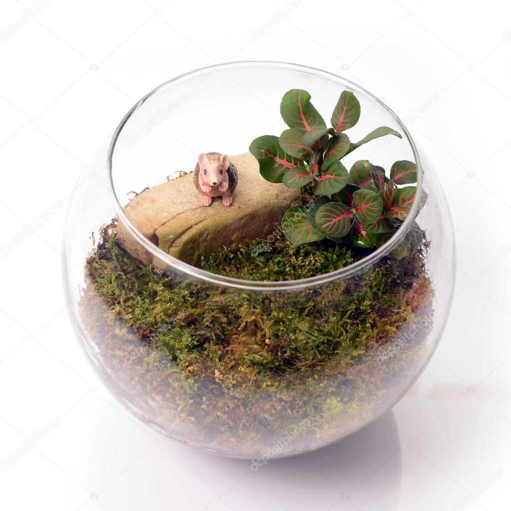 Terrarium in glass bottle.