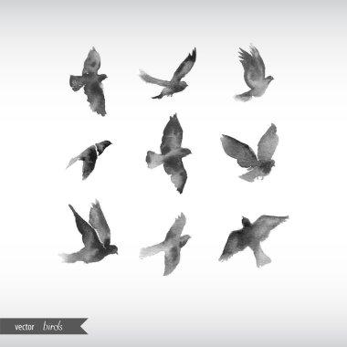 Watercolor birds. Vector illustration clip art vector