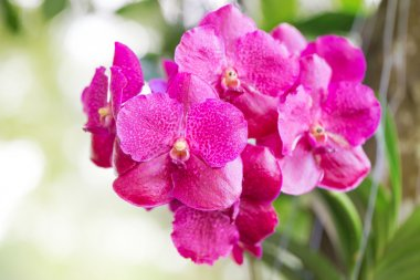 pink orchid in garden