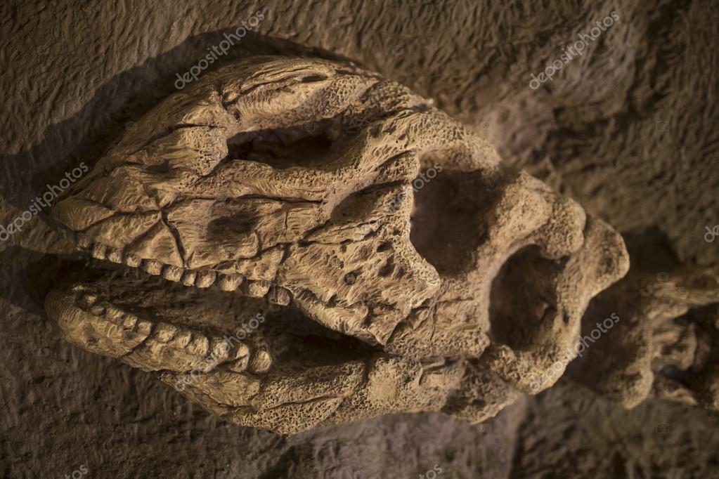 μπορεί να χρησιμοποιηθεί για τα απολιθώματα