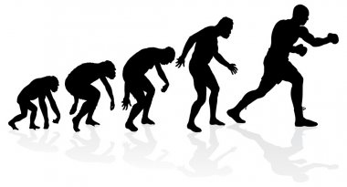 Evolution of the Heavyweight Boxer.