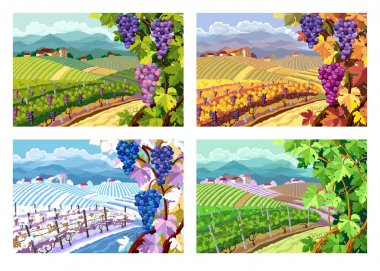 Vineyard and grapes bunches. Four seasons.