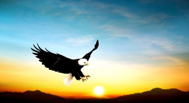 Eagle flying in the sky beautiful sunset