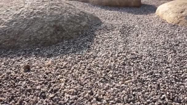Zen stones a Skalka Velká zdobí styl blízko pohled s ranní slunce