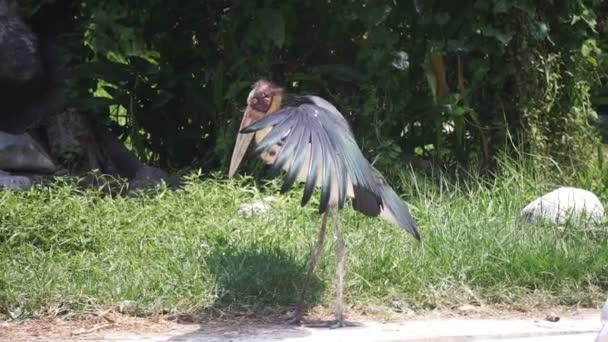 velké ptáky u dívek