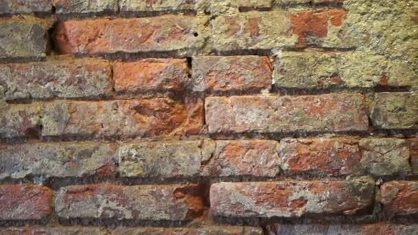 rossi mattoni parete grunge texture