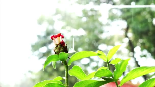 Tropical Rainfall in jungle forest. Green leaves and red flower
