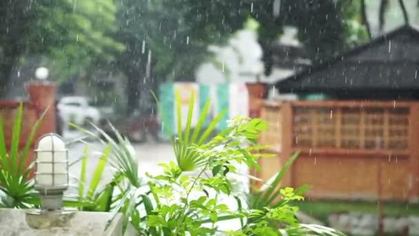 d9340d59ec Tropical rainy season in urban scene with cars transportation running  through the rain