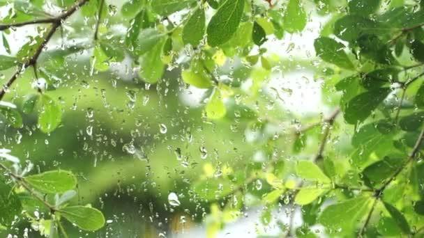 Green lush leaves nature in tropical rain, rainy season